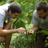 Two men inspecting plant